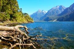 Hollyford, Nationalpark Fiordland stockfoto