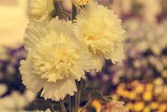 Hollyhock flower Stock Image