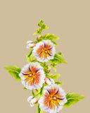 Hollyhock flowers. Watercolor painting. Stock Image