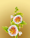 Hollyhock flowers. Watercolor painting. Royalty Free Stock Image