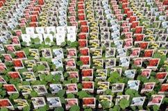 Hollyhocks plants at the wholesale. Royalty Free Stock Photos
