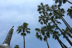 Hollywood e palmtrees Fotografia de Stock Royalty Free