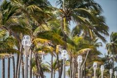 Hollywood f?r gatalampor och palmtr?dstrand fotografering för bildbyråer