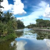 Hollywood Florida Fotos de Stock Royalty Free