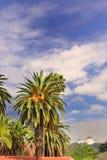 Hollywood Hills Royaltyfria Bilder