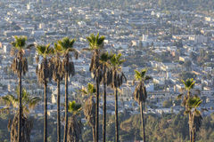 Hollywood Hillside Palms Royalty Free Stock Photos