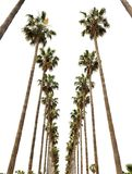 Hollywood palms Royalty Free Stock Photography