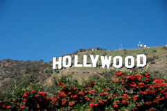 Hollywood sign. With plants in the foreground Stock Photos