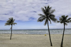Hollywood strand FL Gömma i handflatan tre arkivfoton
