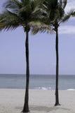 Hollywood-Strand FL Palme drei Lizenzfreies Stockfoto