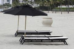 Hollywood-Strand FL Palme drei Stockbilder