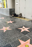 Hollywood Walk of Fame homeless man on the street, sidewalk Stock Images