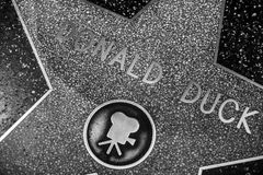Hollywood Walk of Fame. HOLLYWOOD - JANUARY 3: Donald Duck's star on Hollywood Walk of Fame on January 3, 2014 in Hollywood, California. This star is located on Stock Image