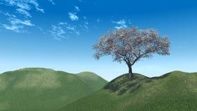 holm цветения Стоковые Изображения
