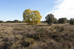 Among Holm Oaks Autumn Stock Images