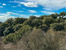 Holm oaks in the pasture at springtime with blue sky and clouds in Spain. Holm oaks in the pasture at spring with blue sky and clouds Royalty Free Stock Image