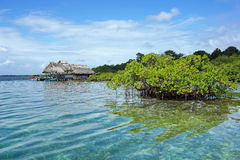 Holme av mangroveträdet med den tropiska restaurangen arkivfoton