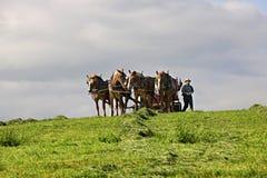 HOLMES okręg administracyjny OHIO, MAJ, - 19 2015: Amish mężczyzna jego tiller a Fotografia Stock