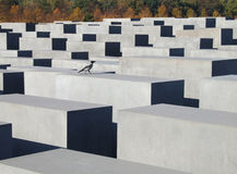 Holocaust memorial in Berlin. Abstract of the Holocaust Memorial in Berlin, Germany with lots of concrete blocks and one bird Royalty Free Stock Image