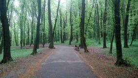 Holosiivskyi公园在基辅,乌克兰 图库摄影