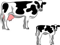 Holstein cattle Stock Image