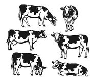 Holstein cattle silhouette set. Stock Images