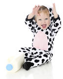 Holstein Delight Royalty Free Stock Images