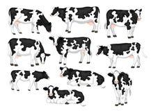 Holstein friesian żakieta trakenu czarny i biały łatający cattles ustawiający ilustracja wektor