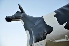Holstein-Vieh Stockbilder