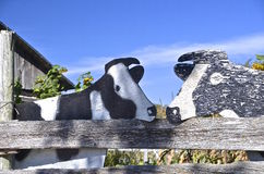 Holstein wood cows Stock Photography