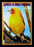 Holubs\ 's Gouden Wever (Textor xanthops), Afrikaanse vogels serie, c Stock Fotografie