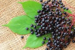 Holunderbeere (Sambucus-Beeren) Lizenzfreies Stockfoto