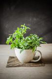 Holy Basil in the cup Royalty Free Stock Photography