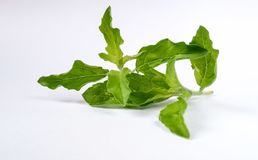 Holy basil Stock Photos