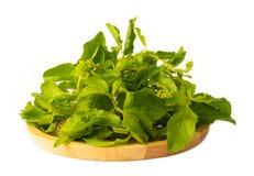 Holy Basil herb. Isolated on white background stock photo