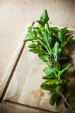 Holy basil herbs on wood chopping block Royalty Free Stock Photo