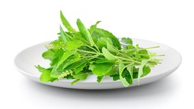 Holy basil in a plate isolated on a white background royalty free stock photos