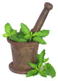 Holy basil or tulsi leaves in a vintage mortar Royalty Free Stock Image