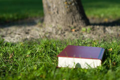 Holy Bible. A holy bible lying in the grass by a tree Royalty Free Stock Photography