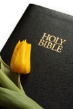 The Holy Bible. With yellow tulip Stock Photo