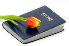 Holy Bible and colorful flower Royalty Free Stock Image