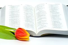Holy Bible and colorful tulip Stock Images