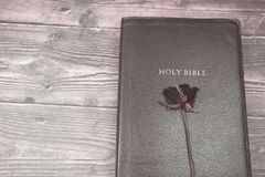 Holy bible and red dry rose on the cover for background. And inspiration royalty free stock images