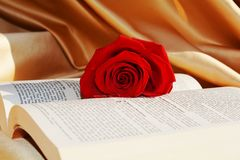 Holy bible and rose, love concept, close up Stock Image