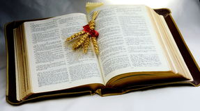 Holy Bible; Word of God with shaft of wheat. Vintage old Holy Bible shaft of wheat presented to represent enlightenment Stock Photos