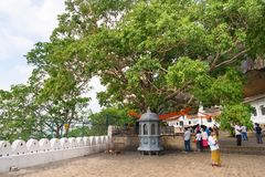 Holy bodhi ficus tree in the Dambulla Golden temple cave complex. DAMBULLA, SRI LANKA -  NOV 2016: Holy bodhi ficus tree in the Golden temple cave complex Stock Photo