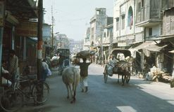 1977. India. A holy cow, on the main street. The picture shows the life at the main street. A cow holy to the hindus is moving down the main street among a Royalty Free Stock Images