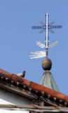 Holy cross pigeon Stock Photography