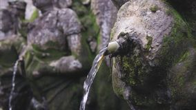 Holy Fauntain in the wild tropical jungle, detailing the weathered surface with white fungus and moss. Lush vegetation. Holy Fountain of the gods, spirits and stock video footage