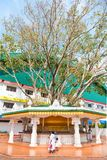 Holy ficus religiosa tree shrine near buddhist temple in Sri Lan. DAMBULLA, SRI LANKA - NOV 2016: Holy ficus religiosa tree shrine near buddhist temple with Royalty Free Stock Images